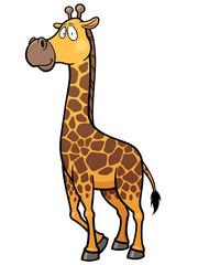 Vector illustration of giraffe cartoon
