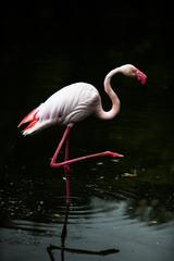 Flamingo フラミンゴ