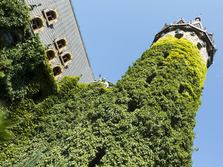 The tower of the castle, wrapped in green ivy on blue sky backgr