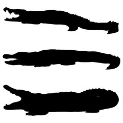 Crocodile silhouettes on a white background
