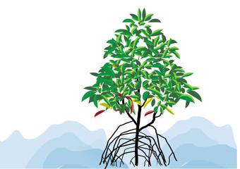 Mangrove tree on the  white background vector illustration