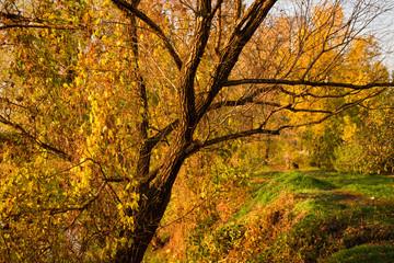 Golden autumn, tree