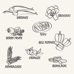 Food vector design. Line drawing natural food. Vector hand drawi