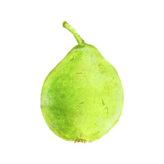 Pear. Hand-drawn fruit. Real watercolor drawing. Vector