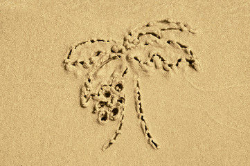 drawing on the sand palm