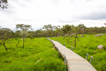 Landscape at Pa Hin Ngam National Park in Thailand.