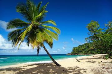 Calm  caribbean beach with palm tree
