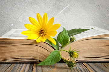 Yellow autumn flower on the opened old book