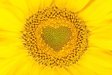 Beautiful sunflower background