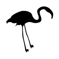 flamingo silhouette on a white background