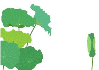 Lotus leaves vector illustration