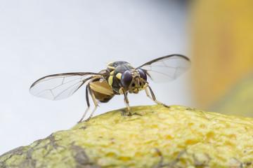 Flies cause diseases. Flies fruit.