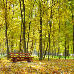 autumn park and bench