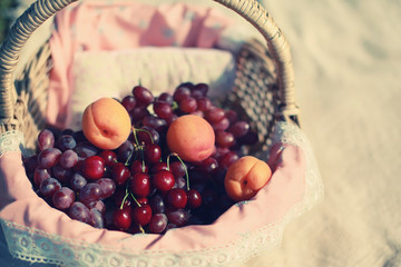 Basket of fruits, the harvest of grapes, cherries and apricots,