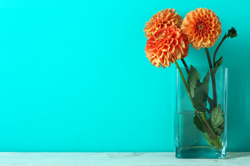 dahlia in a vase on blue background