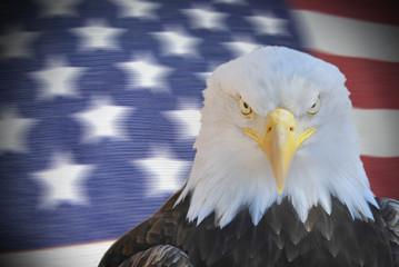 American eagle portrait