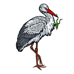 Stork standing on one leg and holds a frog in beak. Isolated vector illustration on white.