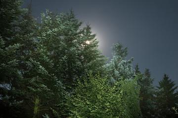 Photo sur Aluminium Jungle Nachthimmel bei Vollmond mit Bäumen - Langzeitbelichtung