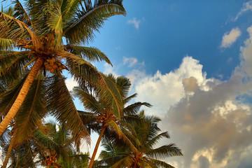 palms under blue sky