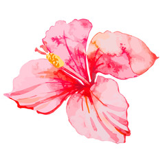 Set of tropical flowers. Hibiscus. Leaves.
