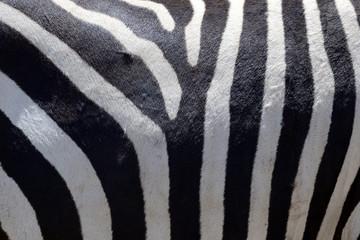 Wall Mural - Zebra skin