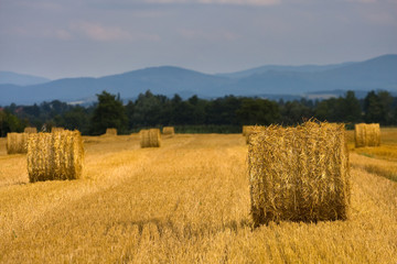 Straw rolls on field, Poland.