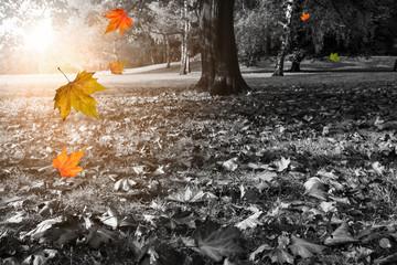 Fallende Blätter und herbstlicher Park in Schwarzweiß