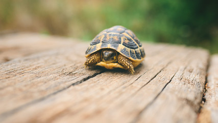 Turtle on a wooden beam