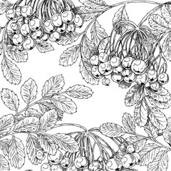 Black and white graphic drawing autumn bunches of rowan