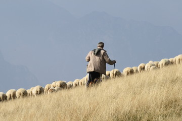 Italy, garda lake, monte baldo-A shepherd with sheep