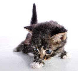 Small  kitten looking searching