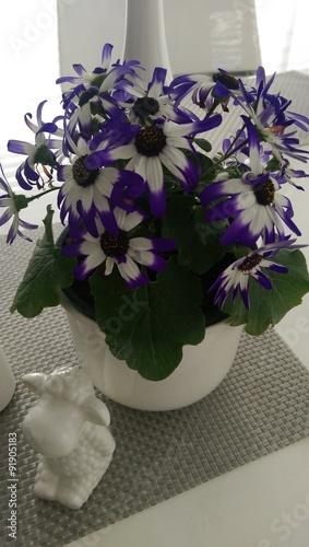 Blumentopf mit weiß-lila Blumen auf einem weißen Tisch mit ...