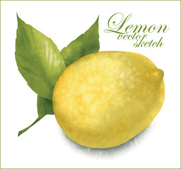 Lemon sketches.