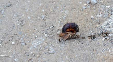snail  on a dusty road