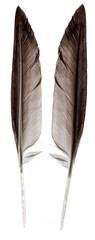 Wild bird feather isolated on white