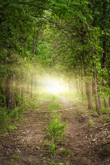Forest Path with Light