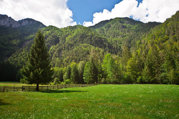 Pasture green field in Slovenian Alps