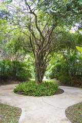 footpath in garden