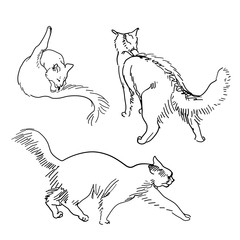 Set of vector sketch cats