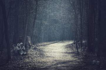 Halloween landscape. Dark forest with empty road