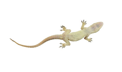 Dead lizard of reptile on white background with clipping paths. Wall mural