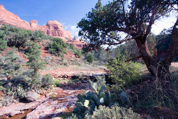 Oak Creek, cacti, trees and cliffs along Schnebly Hill Road near Sedona, Arizona