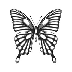 beautiful black and white butterfly. with watercolor effect