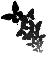 background with a border of butterflies flying