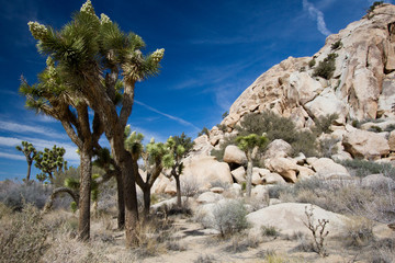 Joshua Trees and intriguing rocks in Joshua Tree National Park in California