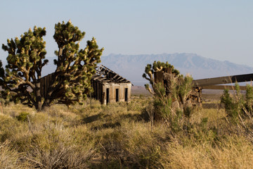 Joshua Trees and a ruined ranch building in Mojave National Preserve in California