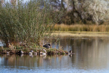 Ducks in a marshy pond at Monte Vista National Wildlife Refuge in southern Colorado