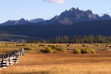 Fields, fences, cattle, and the Sawtooth Mountains near Stanley, Idaho