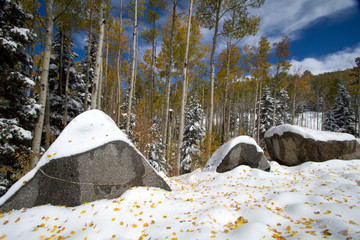 An early snowfall brightens yellow aspens and boulders in Santa Fe National Forest in New