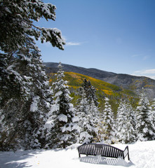 An early snowfall brightens yellow aspens at Aspen Vista in Santa Fe National Forest